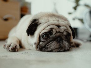 Will social distancing affect how I socialize my puppy? How will I entertain my dog within my home?