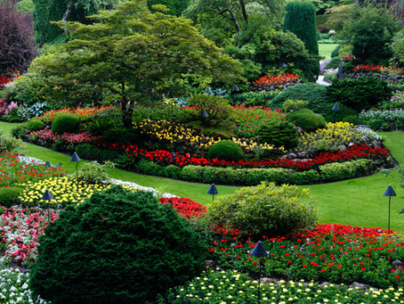 Why a landscaper needs a professional website