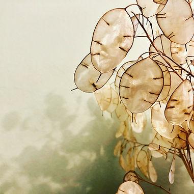 Image by Diane Helentjaris
