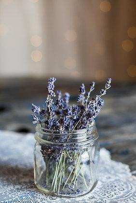 Lavender (Spike)   ORGANIC Spain