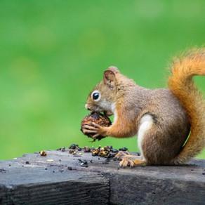 Account of a Nut by Morgan L. Ventura