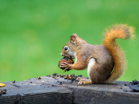 Lessons From My Latest Bout of Being Nuttier Than Squirrel Shite