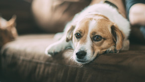 Enquiries continue following decline in dog theft reports