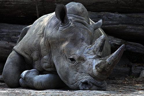 Restore Black Rhinoceros Habitat