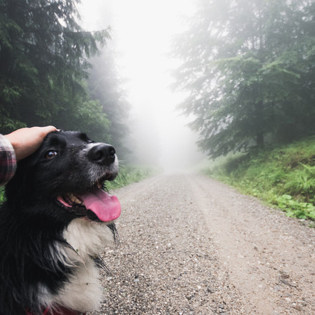 HIKING WITH A SENIOR DOG: EXTRA PRECAUTIONS TO TAKE