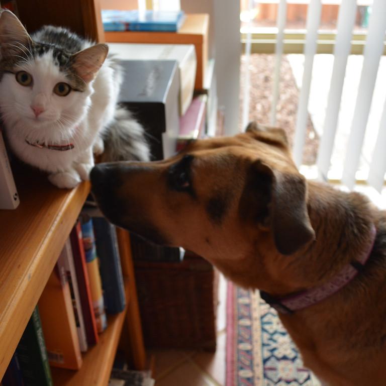 2021 Interfaith Caregivers Pet Contest