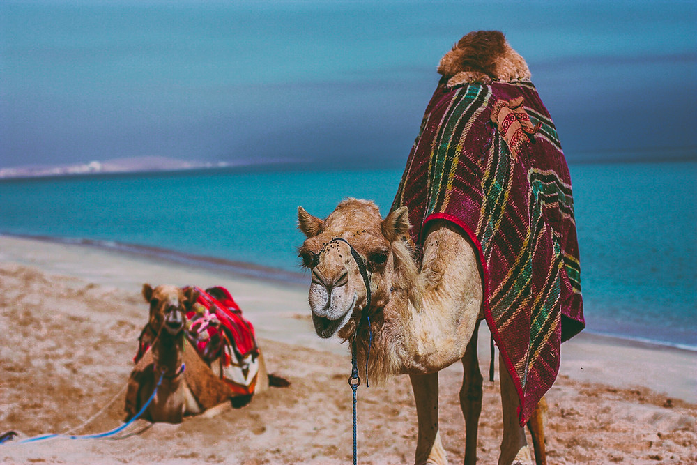 Debt camel, What You Need To Know