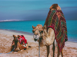 Debt Camel, What Is Debt Camel? What You Need To Know In 2021
