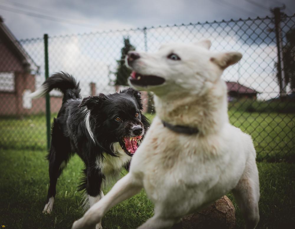 Twee honden komen niet overeen