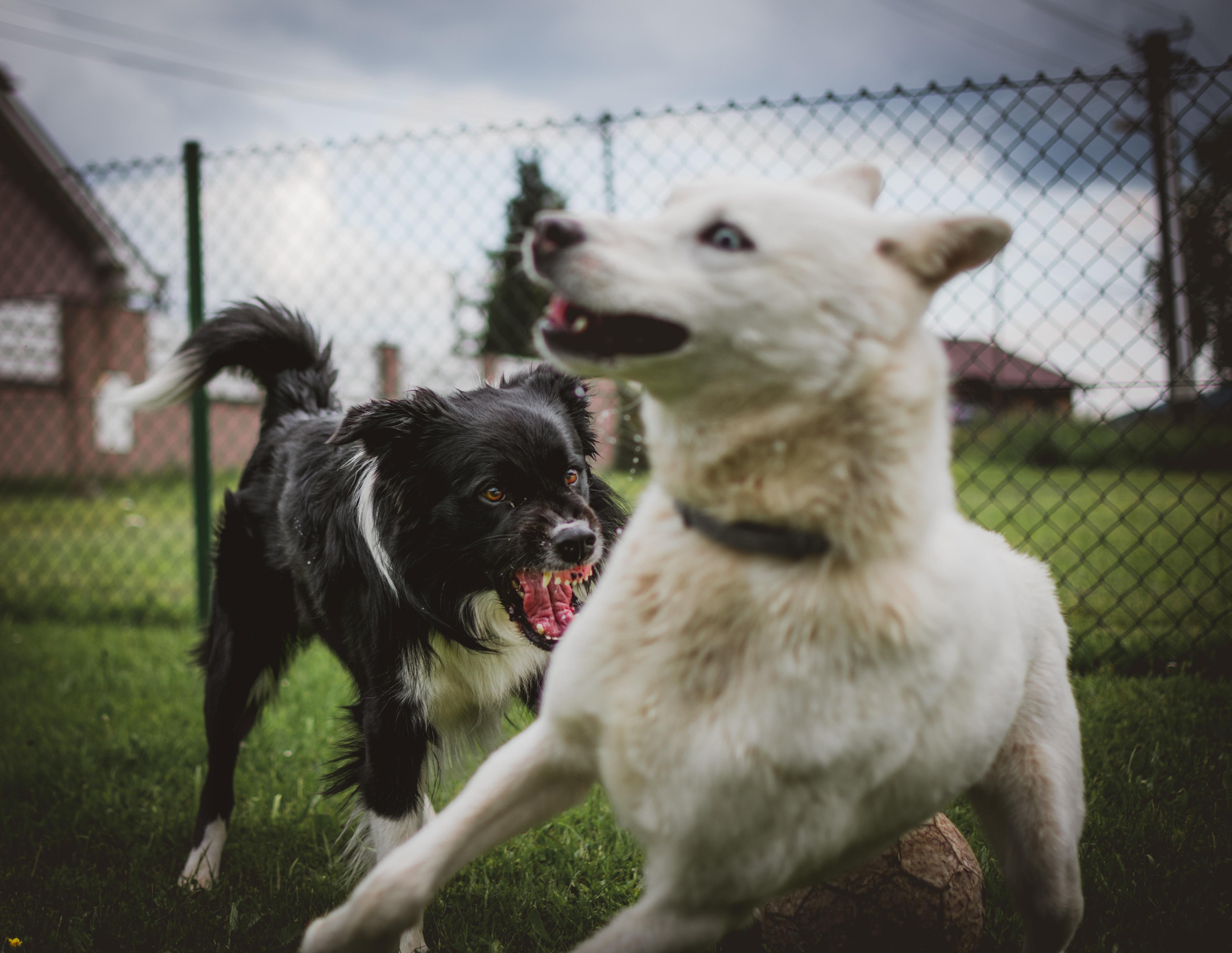 Hundmöteskurs