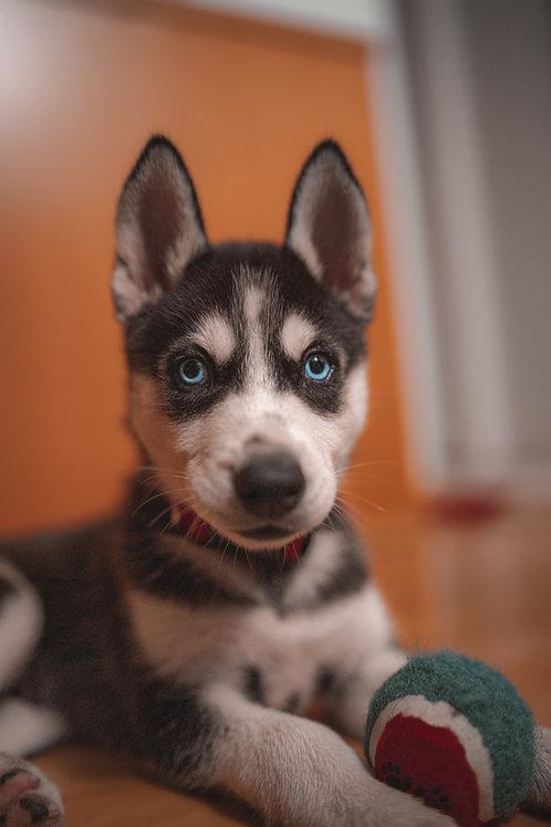 Puppy Plus Training Class