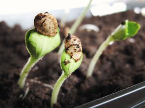 Timeline- Seeds for Eastern Ontario Gardens