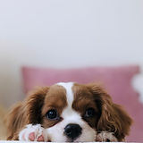 Best Food For Puppy