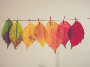 Querer Cambiar: 6 etapas para alcanzar los cambios que deseas