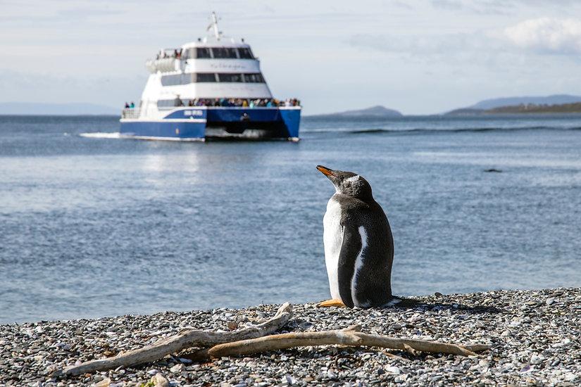 crucero_australis_fiordos_argenitna