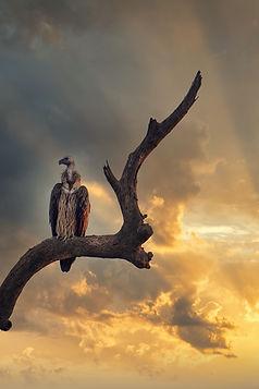 Image by Abhishek Singh