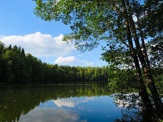 Lac et forest