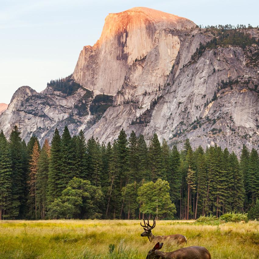 Viaggio di nozze in America Yosemite Park