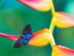 Faune et floe, Costa Rica