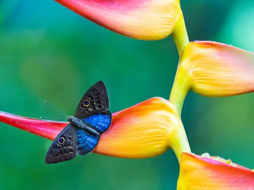 Papillon et orchidée, photo de William Warby
