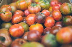 British Tomatoes