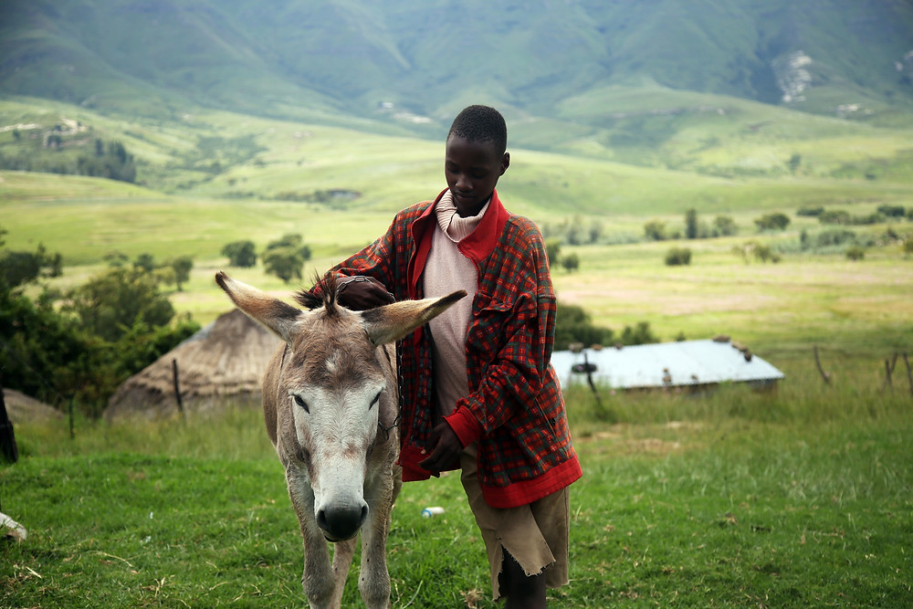 A Boy in Lesotho caressing his donkey