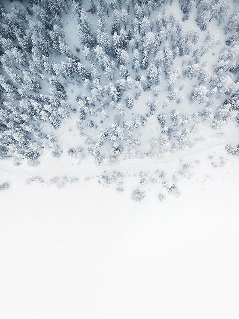 Palmių spsauga žiemai