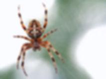 spider control troy ohio