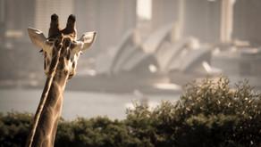 Visit these Australian icons Virtually