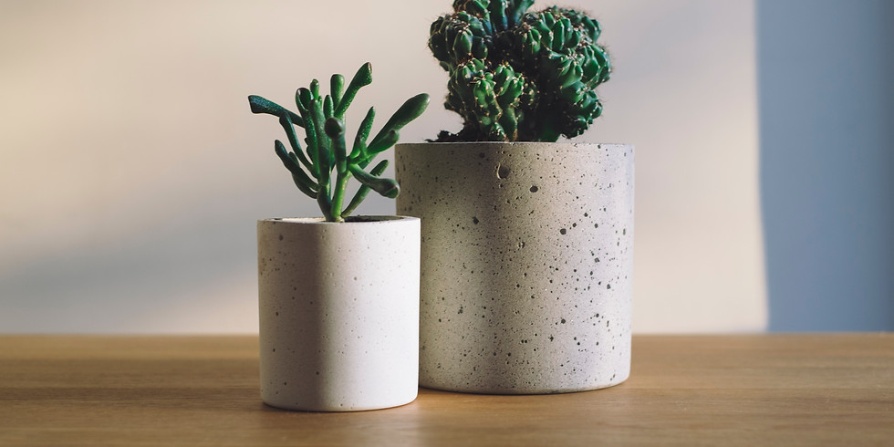 How Not To Kill Your House Plants