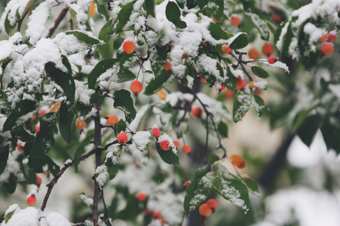 Rosehips & Berries