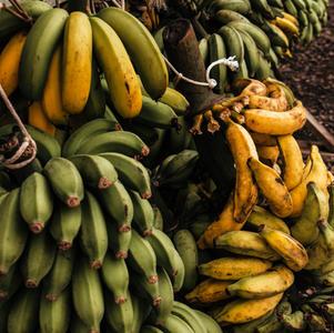 Naw Naw...Not Bananas