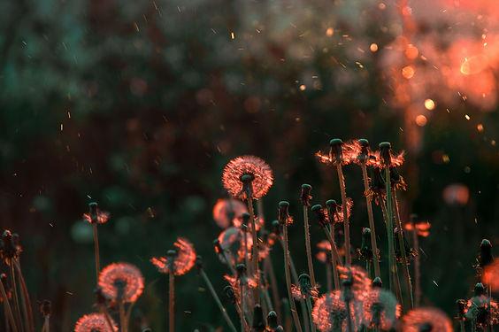 Image by Polina Lebedeva