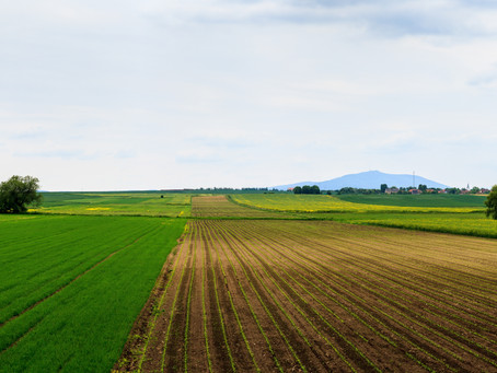 Does Arbitration fit Agribusiness?