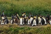Tours a Tierra del Fuego