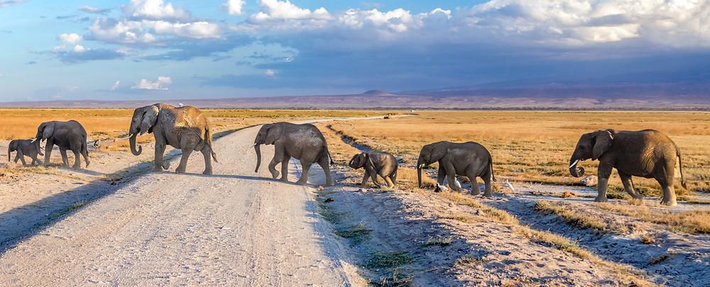travel bucket list idea 2021: spot elephants on a kenya safari