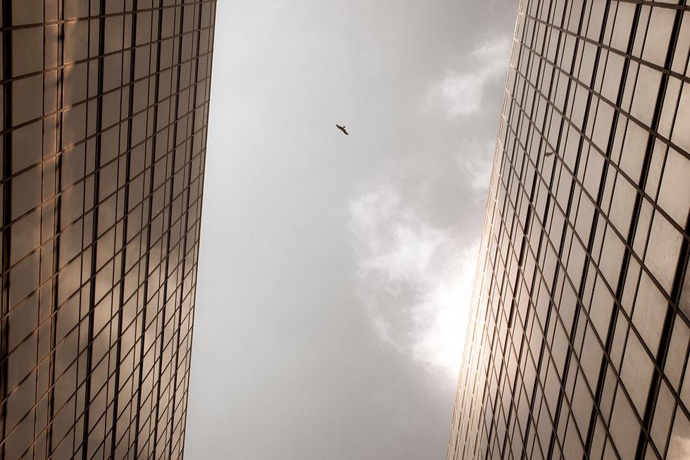 Image by Sergio Capuzzimati