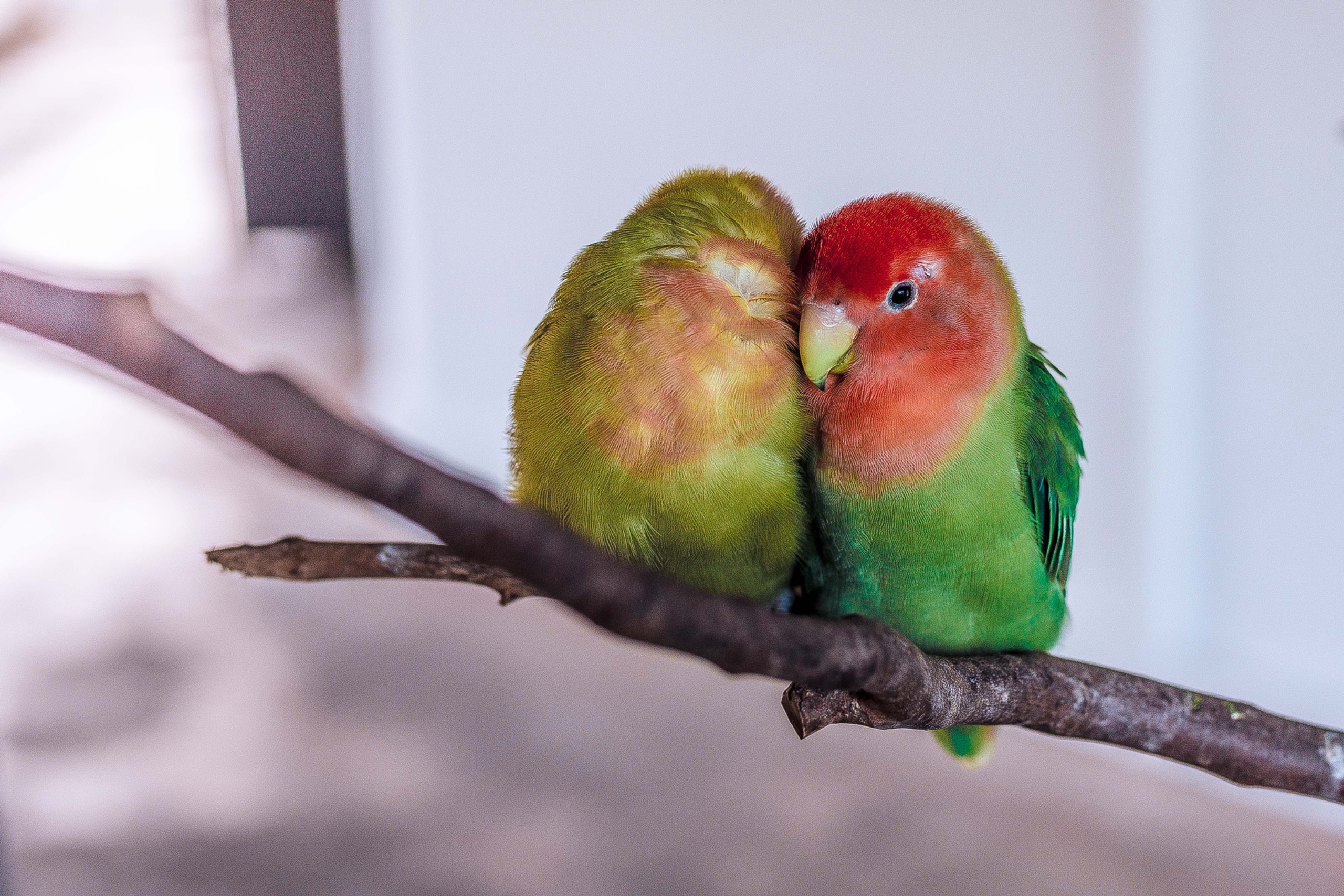 Pet birds and Sterifab