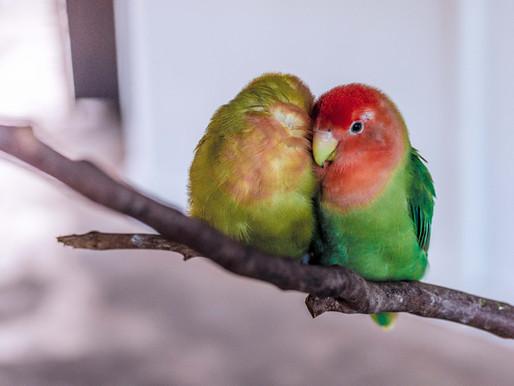 Is Having a Pet Bird a Good Idea? An Avian Vet Weighs the Pros and Cons