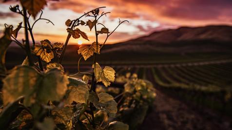 God's Vineyard - Sunday Service 4.10.20