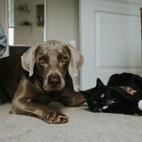 Psi i mačke u istoj kući?