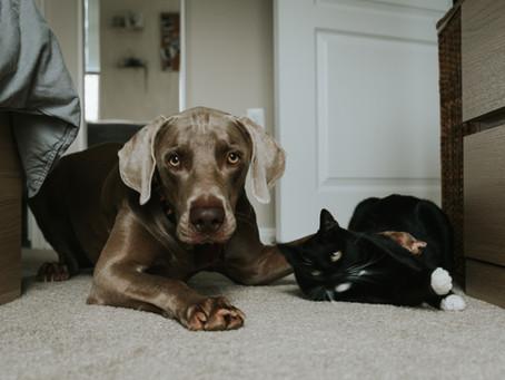 Tips Umum Pelihara Anjing Dan Kucing Dirumah Yang Harus Diperhatikan
