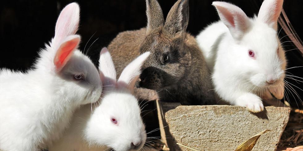RRMN Romp & Spa Bunny & Piggie Play Time/Nail Trim Event