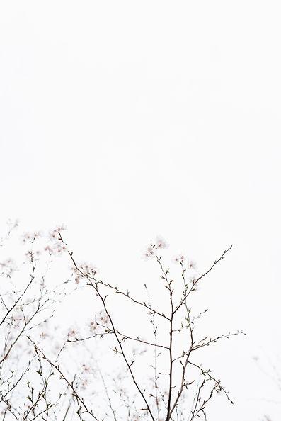 Image by Masaaki Komori