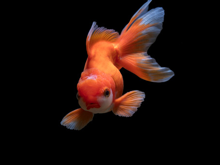 Freshwater Fish 4/2
