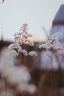 Image by Anastasia Lysiak