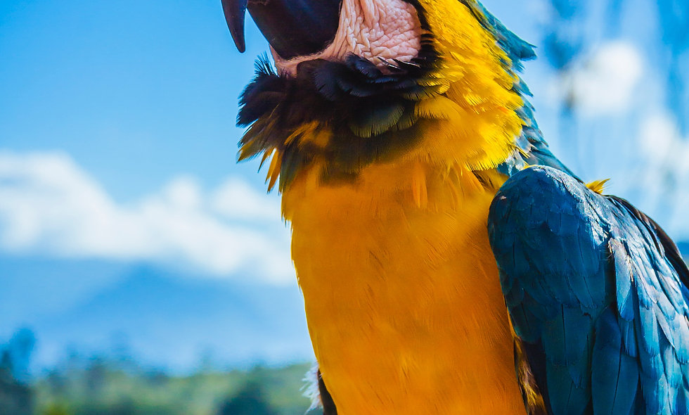 A Macaw Can Multiply