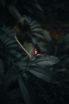 Image by Arun Clarke