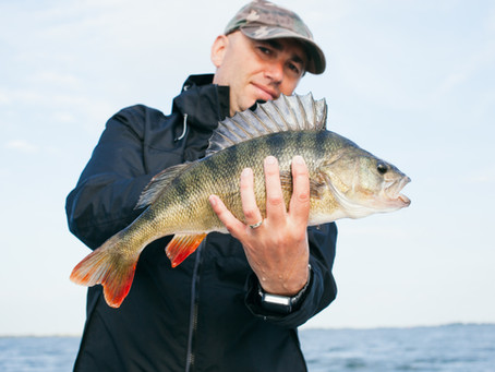 An Introduction to Bass Fishing