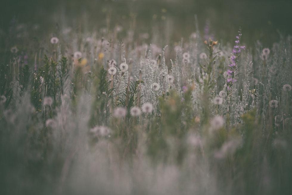 Image by Vanessa Ochotorena